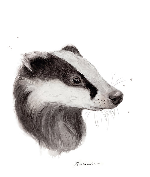 Badger portrait - giclee print