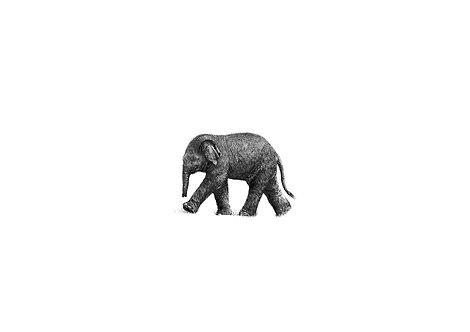 Miniature baby elephant - PRINT