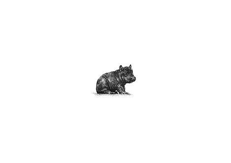Miniature baby hippo - PRINT