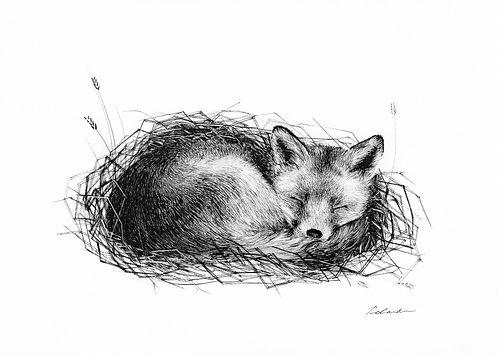 Dreaming in the hay - ORIGINAL