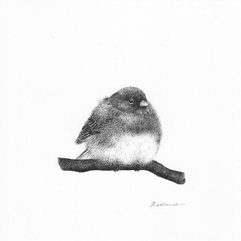 Fluffy bird |  original ink illustration