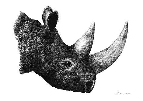 Rhino portrait - PRINT