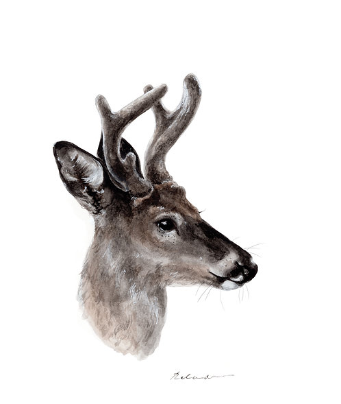 Stag - giclee print
