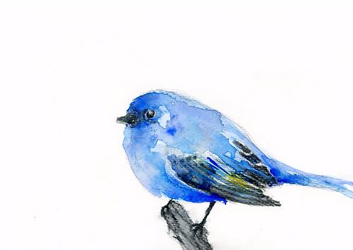 Petit oiseau bleu