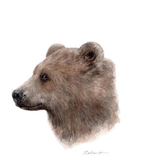 bear | giclee print