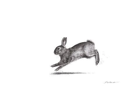 Bunny sprint - PRINT