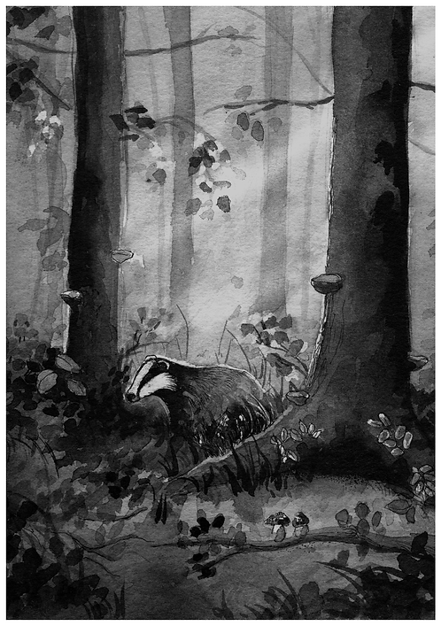 Badger in his forest - PRINT