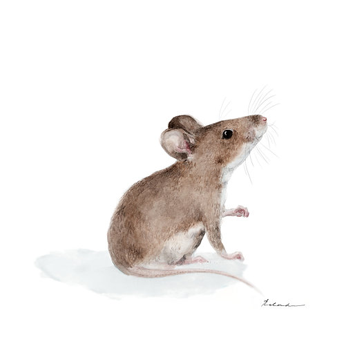 Little rat | giclee print