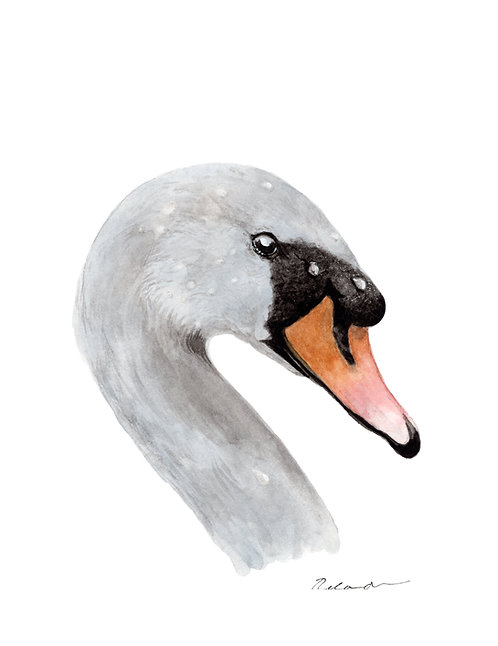 Swan • original watercolor