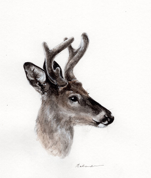 White tailed stag •  original watercolor
