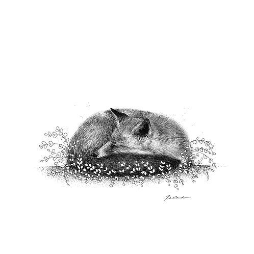 Sleeping fox     original ink illustration