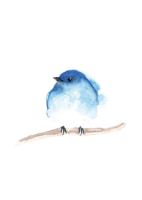 Blue bird - Postcard