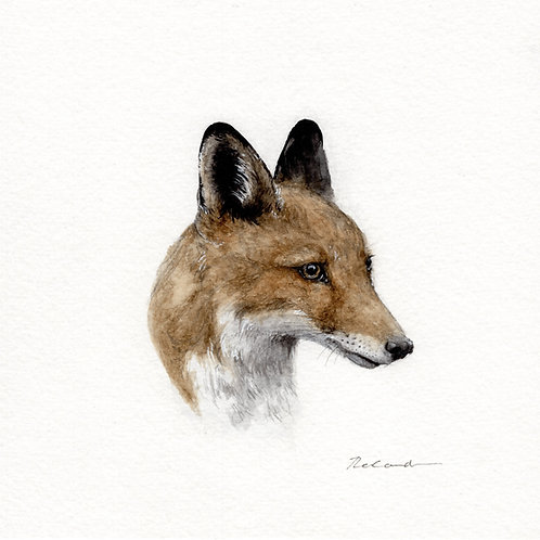 Fox portrait  •  original watercolor