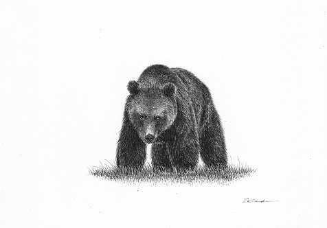 Bear  |  original ink illustration