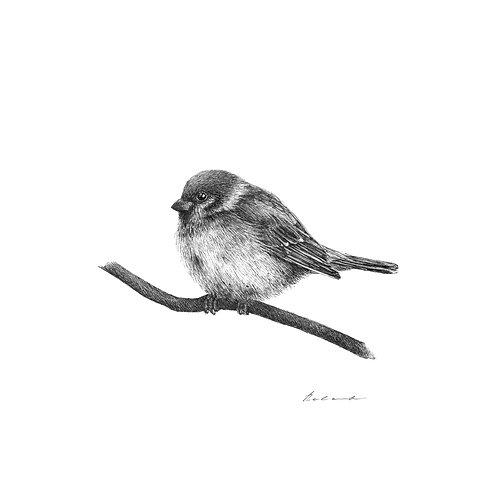 Sparrow - PRINT