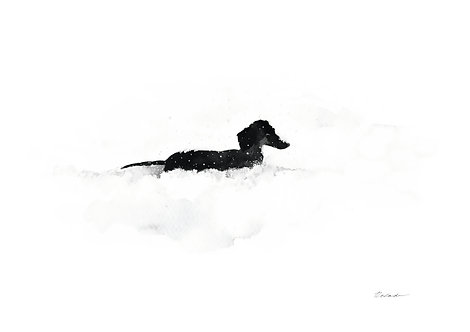 Dachshund in the snow / PRINT