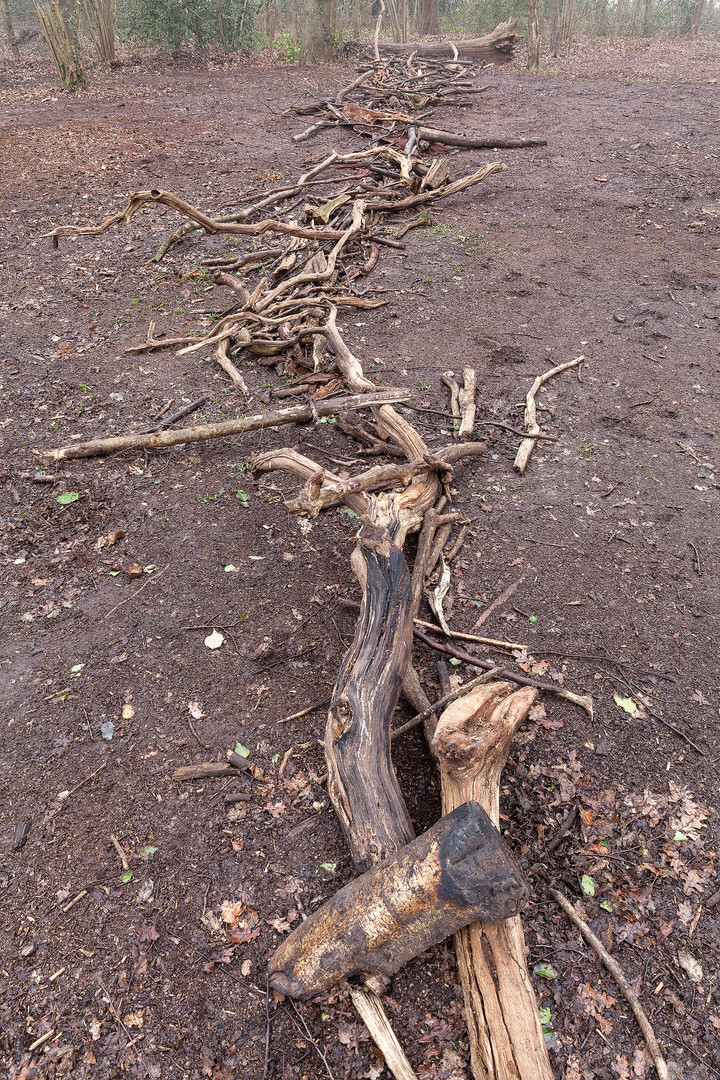 Branches arranged as base for a dead hedge, Wimbledon Common, London, England