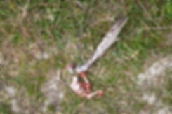 Feather and bloodied bones of bird eaten by an animal.