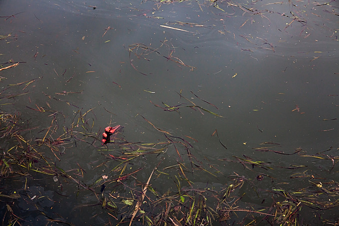 Red rubber glove floating in River Thames, London