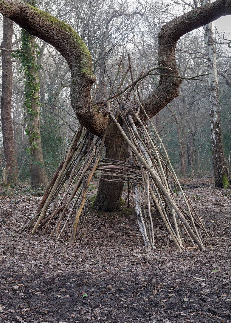 Wooden den built against forked tree trunk, Wimbledon Common, London, England, UK.
