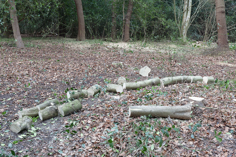Tree trunk sawn into many sections, lying on ground, Wimbledon Common, London, England.