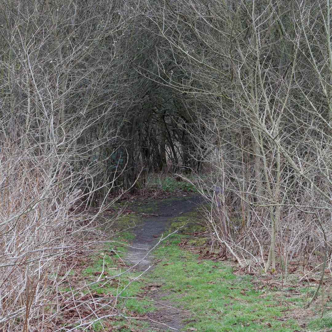 Hidden path through trees, Wimbledon Common, London