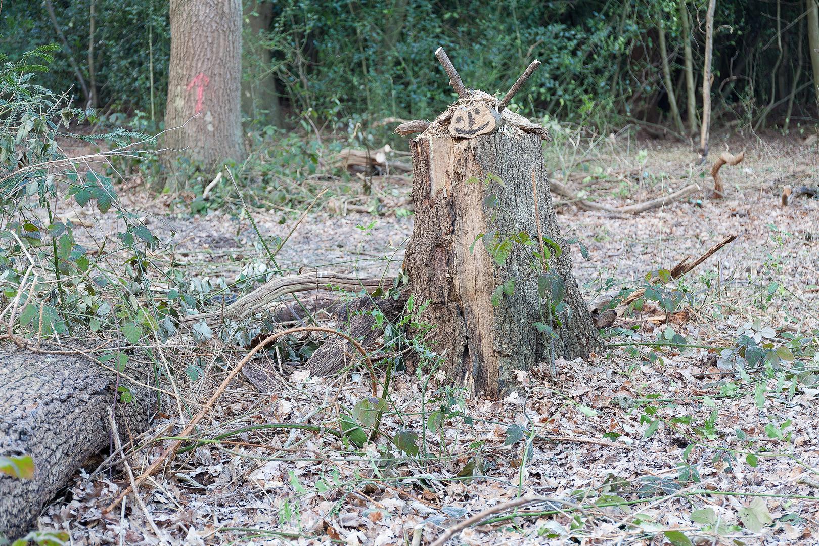 Woodland art, face drawn on log placed on top of tree stump, Wimbledon Common, London, England, UK.