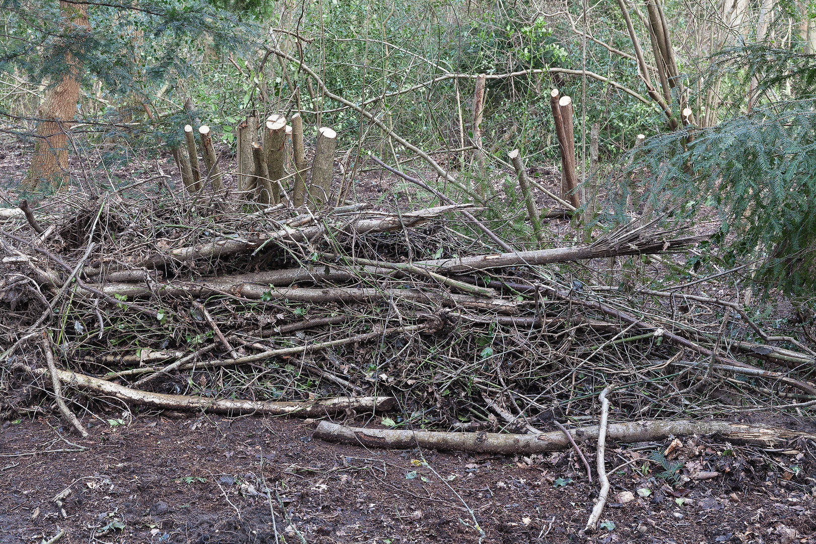 Dead hedging made from branches and tree stumps, Wimbledon Common, London, England