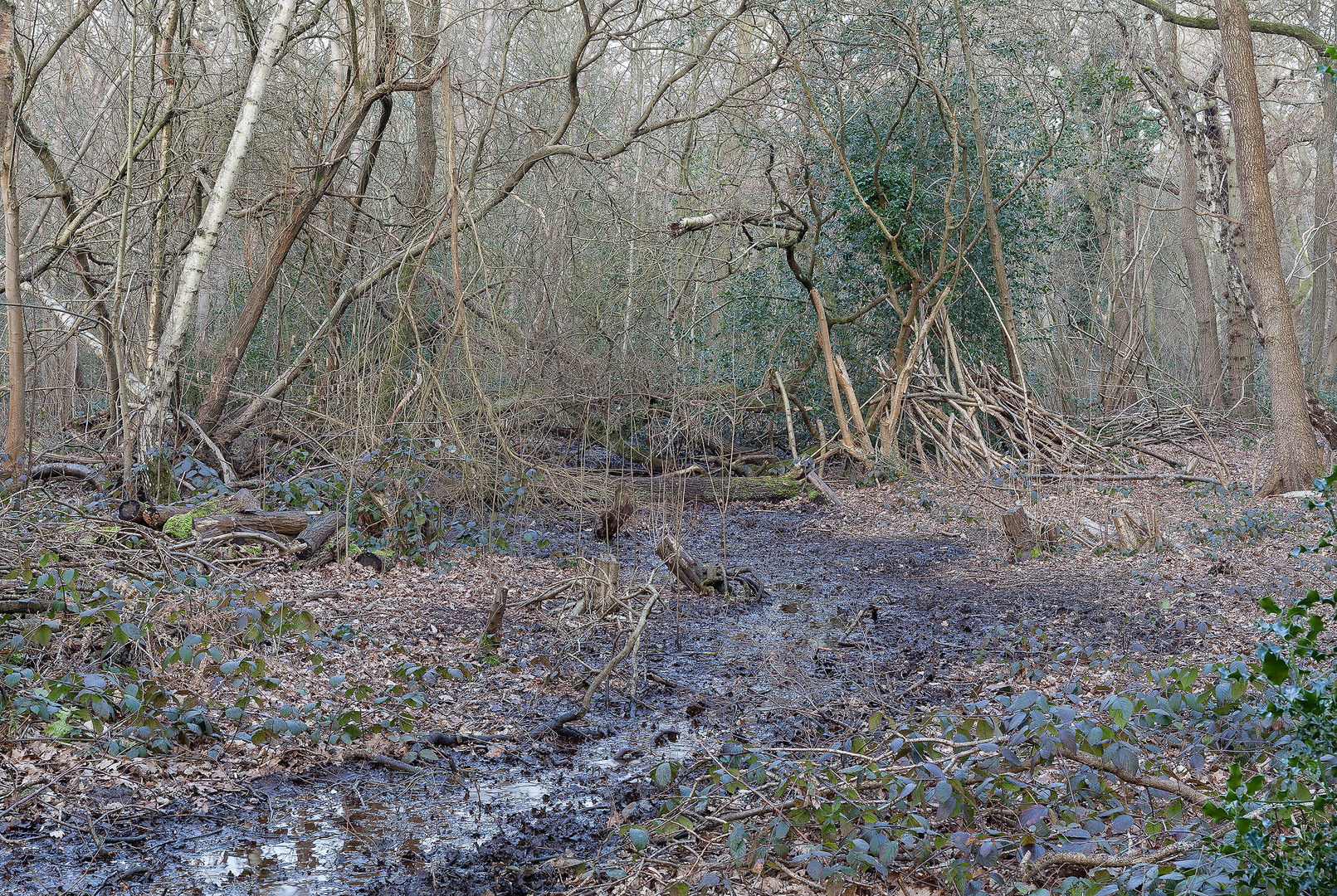 Swamp and den in woodlands, Wimbledon Common, London, England, UK.