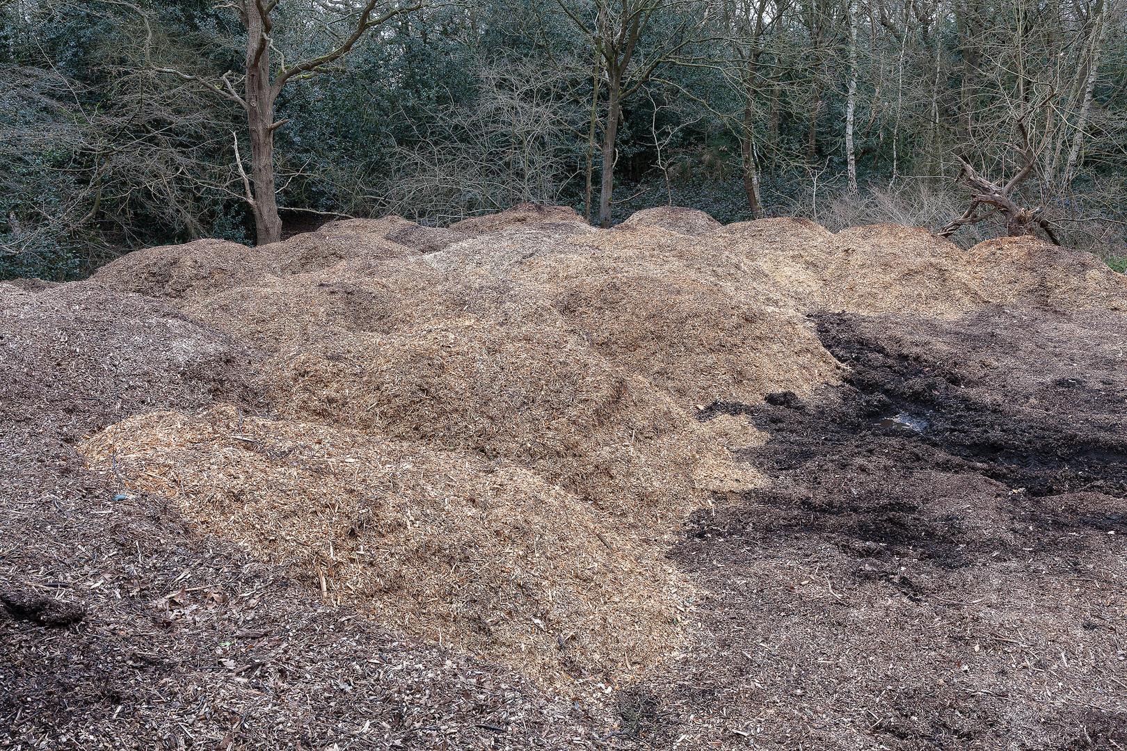 Sawdust mounds on edge of woodland, Wimbledon Common, London, England, UK