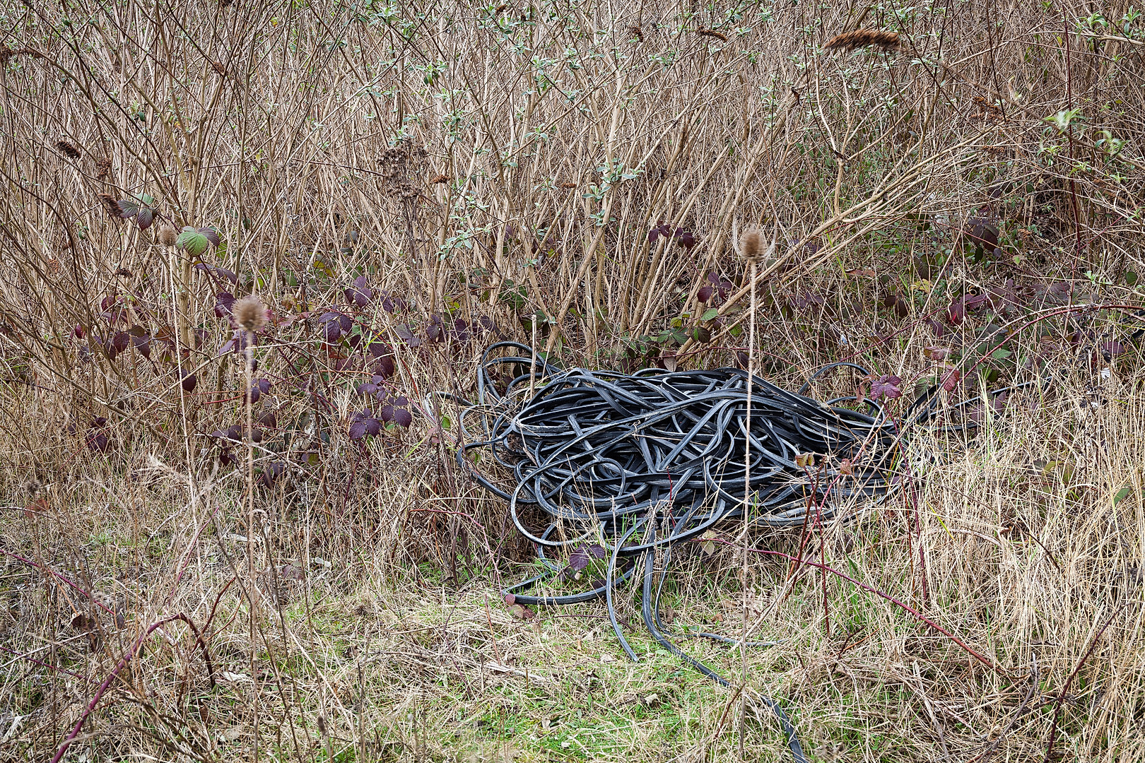 Black rubber tubing in undergrowth