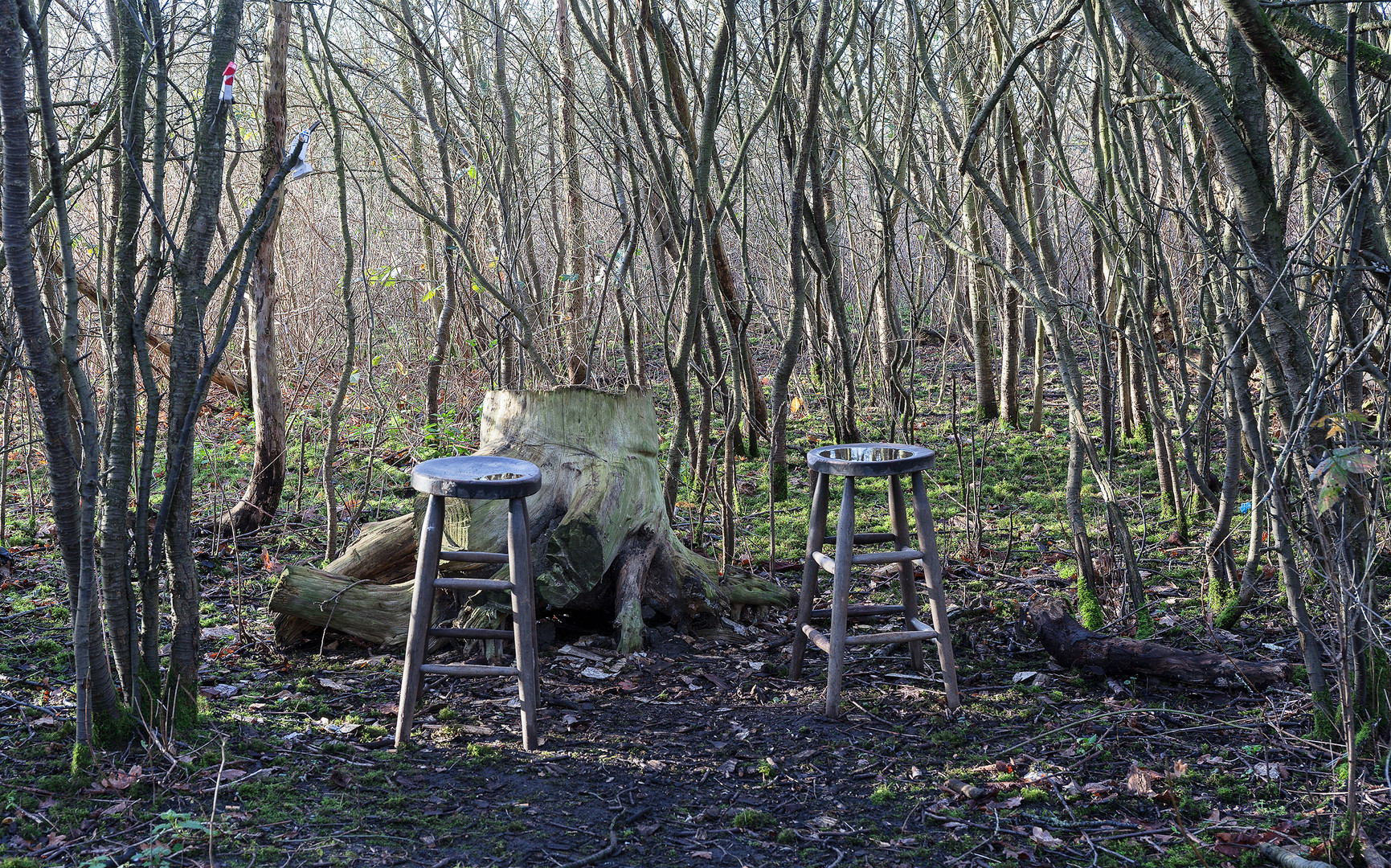 Two bar stools in a thicket, Wimbledon Common, London, England, UK