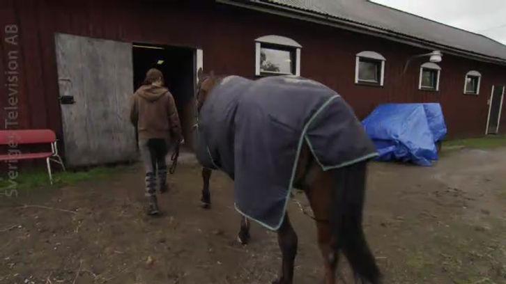 SVT program: Hjärta för djur