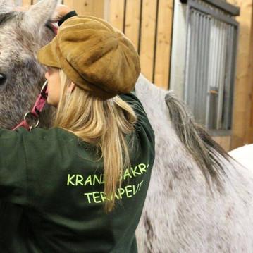 Kraniosakral terapi på häst under utbildning