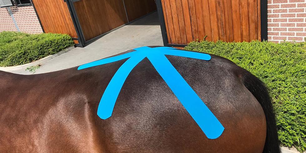 Kinesiotaping grundkurs i samarbete med Equine Studies
