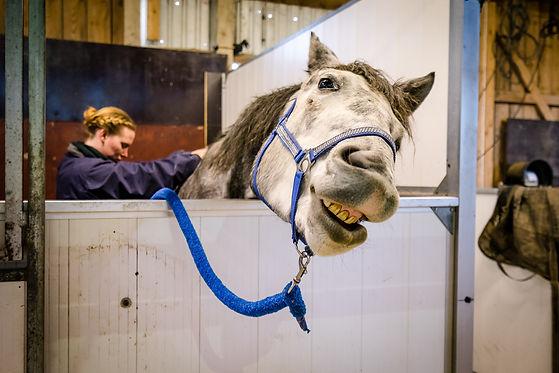 Kranio-horse-09689.jpg