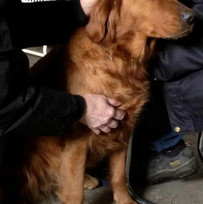 Kraniosakral behandling hund