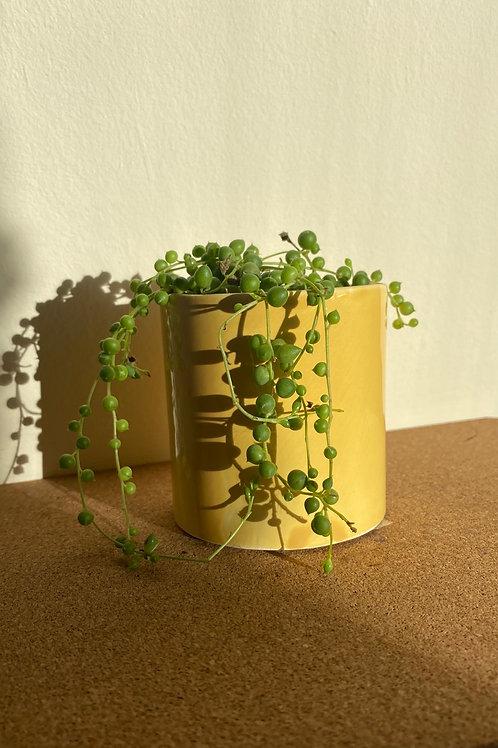 Mustard Small Planter