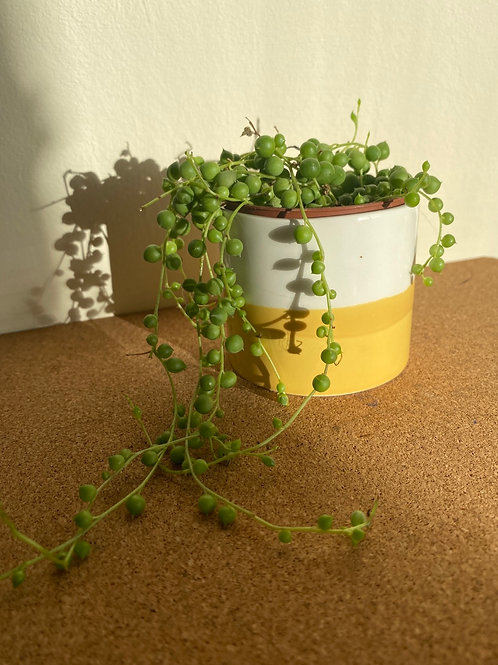 Mini Mustard Planter