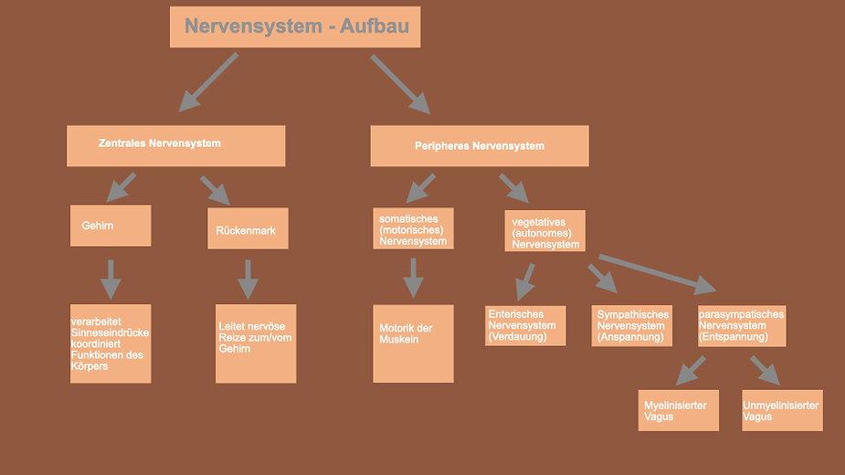 Nervensystem.001.jpeg