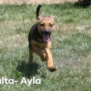 Malta-Ayla
