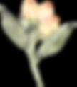 SerenityElements_019.png