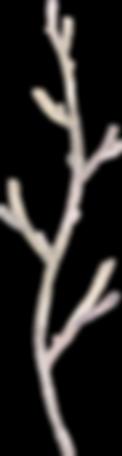 SerenityElements_039.png