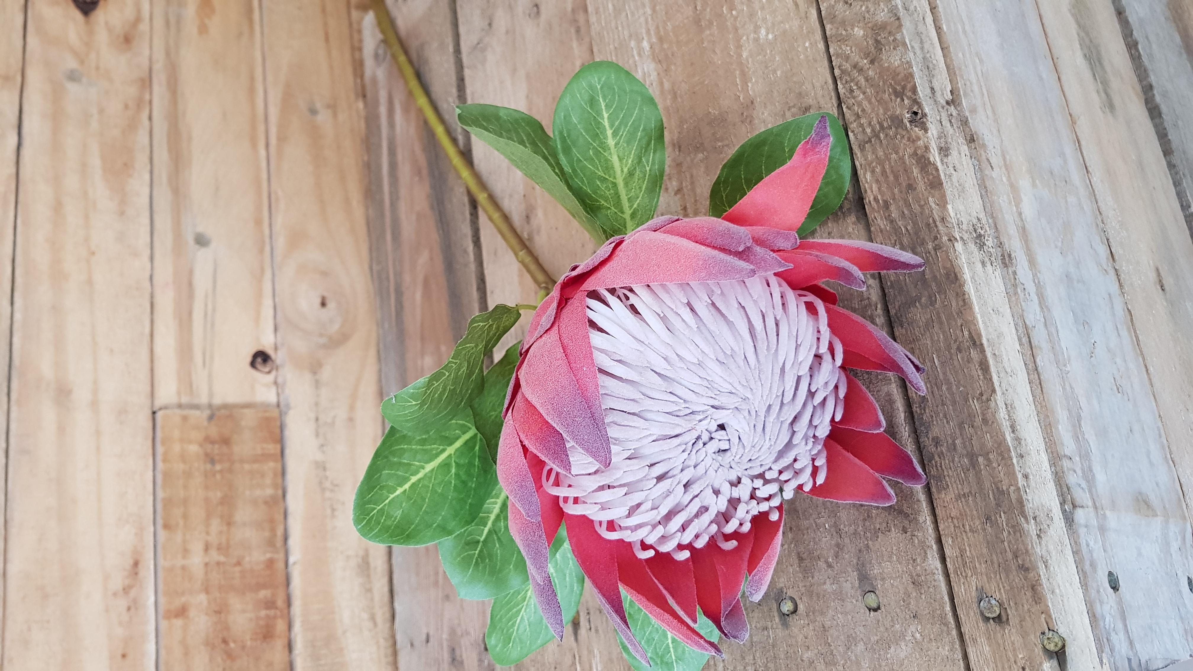 Wooden Proteas Gauteng Plaasmeisie Pty Ltd