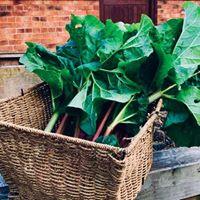 Community Farm Vegetables