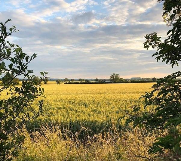 Treewell Farm's stunning views