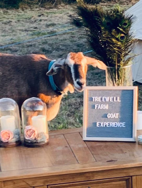 Treewell Goat Experiences