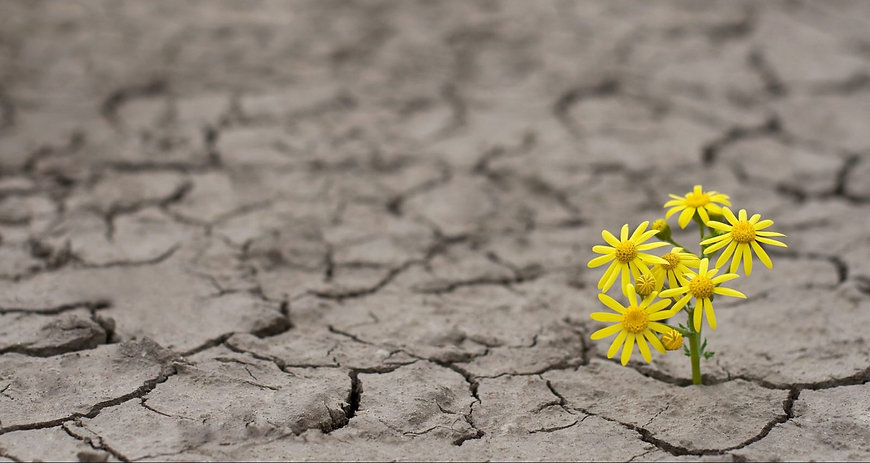 flower-hope-earth-climate-change-e149333