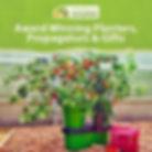 Clifton Chilli Club Advert - Greenhouse