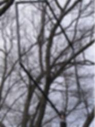 antennnaa.jpg
